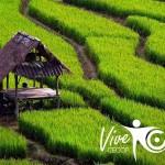 Grecia y Vietnam, próximos destinos de CECOP