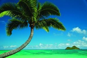 Con-MauiJim